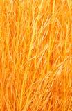 Orange  sisal Royalty Free Stock Images