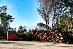 Orange sk?pbil som parkeras bredvid klippt vedtr? i en skog fotografering för bildbyråer