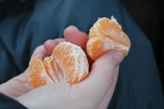 Orange skivor av mandarinen i hand arkivfoto