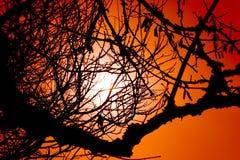 orange sky Arkivfoto