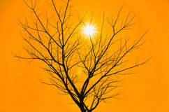 Orange sky with dead tree and sun. Stock Photos