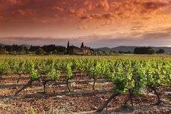 Orange Sky over Green Vineyard Royalty Free Stock Photos