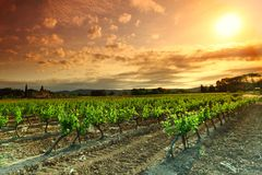 Orange Sky over Green Vineyard Royalty Free Stock Photo