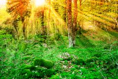 Orange sky over the trees. Uncontaminated underwood in the natural reserve Stock Photography