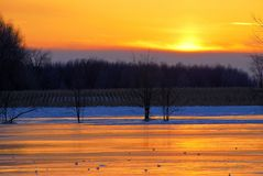 Orange Sky Over Winter Cornfield. Pieces of ice are highlighted on the on the surface of a frozen stream just after sunset. The rows of a cornfield are Royalty Free Stock Images
