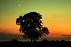 Moon set over sea stone coast and tree. Orange sky after sunset stock images