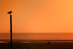 Orange sky Stock Photos