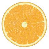 Orange Slice. Image of a orange slice against white background Royalty Free Stock Image