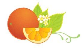 Orange slice. Fruit illustration of orange slice with leaves stock illustration
