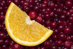 Orange slice in cranberries Royalty Free Stock Photo