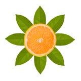 Orange slice and orange leaf in sun image isolated on white back Stock Photos