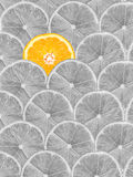 Orange Slice Stand Out Of Yellow Lemon Slices Royalty Free Stock Photography