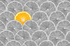 Orange Slice Stand Out Of Yellow Lemon Slices Stock Images