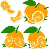 Orange slices, collection of  illustrations Stock Image