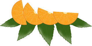 Orange slices and leaves Stock Images