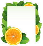 Orange slices and leaves Stock Photos