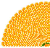 Orange slices making a border. 