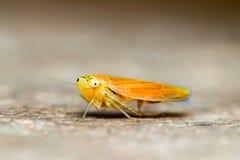 Orange slut för låg vinkel för gräshoppa upp Royaltyfri Bild