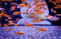 Meeting of colorful fish under water Royalty Free Stock Images