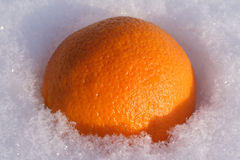 Orange on snow. New year's orange on snow. Bright sunlight Stock Photography