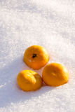 Orange in Snow Royalty Free Stock Photos