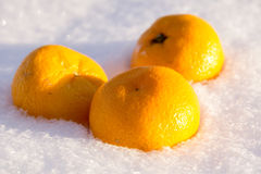 Orange in Snow Stock Photos