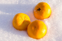 Orange in Snow Royalty Free Stock Photo