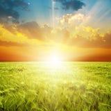 Orange solnedgång över grönt åkerbrukt fält Arkivfoto
