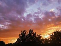 Orange solnedgång i förorterna med silhouetted träd arkivbilder
