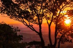 Orange solnedgång med konturer av ett stort träd fotografering för bildbyråer