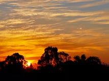 Orange solnedgång med trädkonturn: Västra Australien Arkivbilder