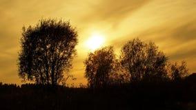 Orange solnedgång och träd Arkivfoto