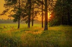 Orange solnedgång: sikt från skog Royaltyfri Bild