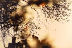 Orange solnedgång till och med det blomstra trädet Royaltyfri Bild