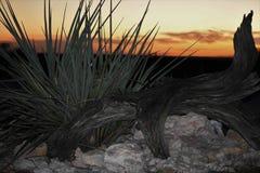 Orange solnedgånglandskap arkivfoto