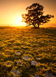 Orange soluppgångfält arkivfoton