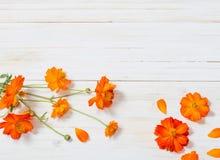 Orange sommar blommar på träbakgrund Royaltyfria Foton