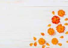 Orange sommar blommar på träbakgrund Royaltyfri Foto