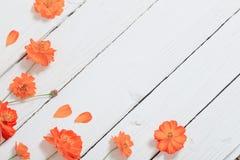Orange sommar blommar på träbakgrund Arkivfoton