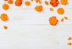 Orange sommar blommar på träbakgrund Fotografering för Bildbyråer