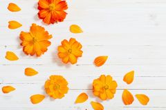 Orange sommar blommar på vit träbakgrund Royaltyfria Bilder