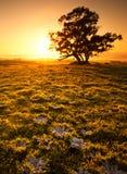 Orange Sonnenaufgang-Feld stockfotos