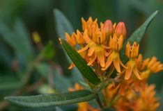 Orange Sonnenschein Lizenzfreie Stockfotografie