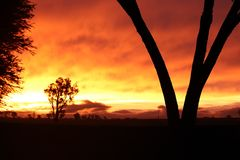 Orange Sonnenuntergang mit Baum Lizenzfreie Stockbilder