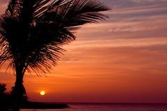 Orange Sonnenuntergang mit Palme Stockfotografie