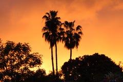 Orange Sonnenuntergang mit Palmen Lizenzfreies Stockbild