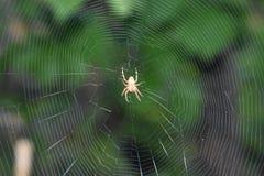 Orange Spider Stock Photography