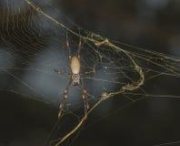orange spindel Fotografering för Bildbyråer