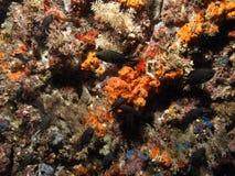 Orange sponge Stock Photo