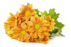 Orange spray Chrysanthemum Stock Photography